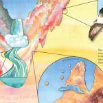 Scientific diagram illustration and book design: Imagination Vacation Yellowstone